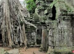 Voyages : Asie Temple de Ta Prohm