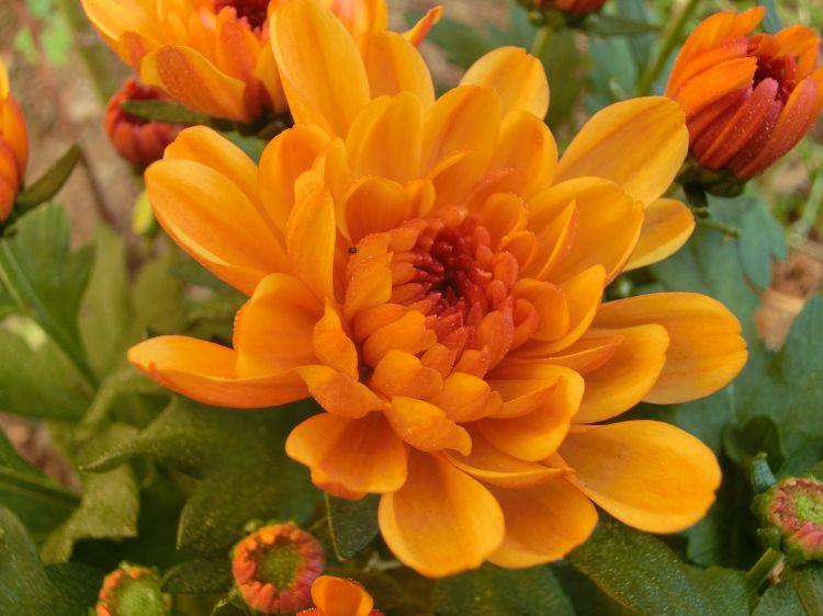 Fonds décran Nature Fleurs fleurs d automne