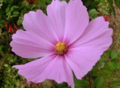 Nature fleurs d automne