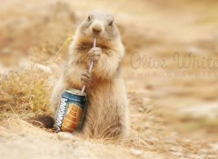 Digital Art Colette la Marmotte qui boit un Orangina