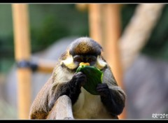 Animaux Le singe