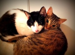 Animals Nils et Ronya