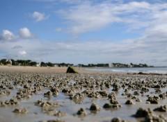 Nature Les vers de sable par milliers
