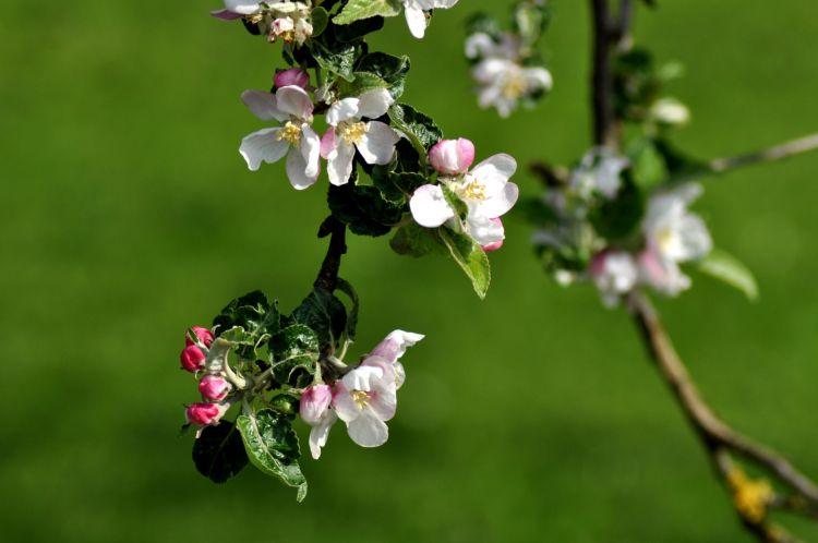 Fonds d'écran Nature Fleurs Wallpaper N°318652