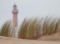 Nature la dune