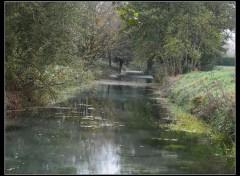 Nature marais et poules d'eau