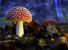 Nature Le champignon le plus beau.