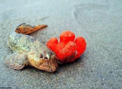 Animals mer vivante