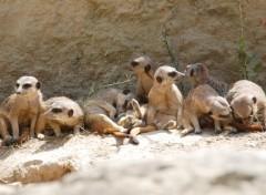 Animaux A la réserve africaine de sigean !...