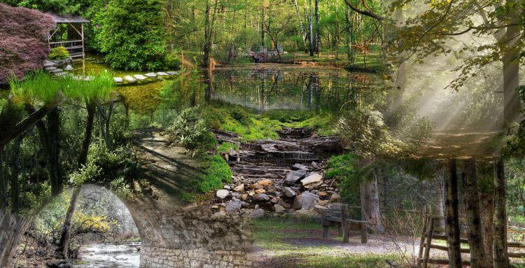 Fonds d'écran Nature Arbres - Forêts Wallpaper N°320260