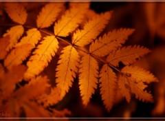 Nature Aux couleurs de saison