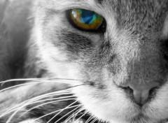 Animaux Chat noir et blanc
