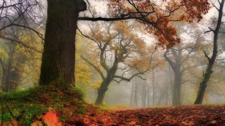 Fonds d'écran Nature Arbres - Forêts Impressions d'automne 2012-2