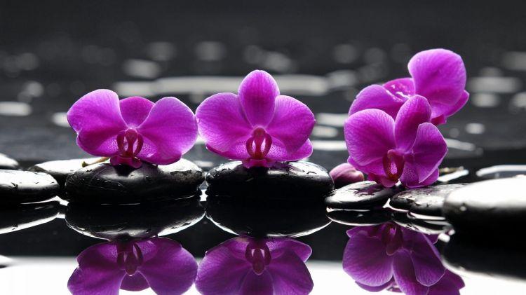 Fonds d'écran Nature Fleurs Wallpaper N°321641