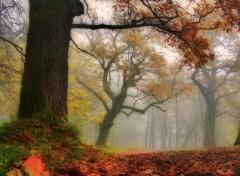 Nature Impressions d'automne 2012-2