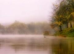 Nature Canards dans la brume.