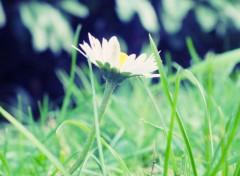 Nature fleur,
