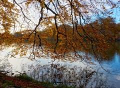 Nature Automne sous un arbre