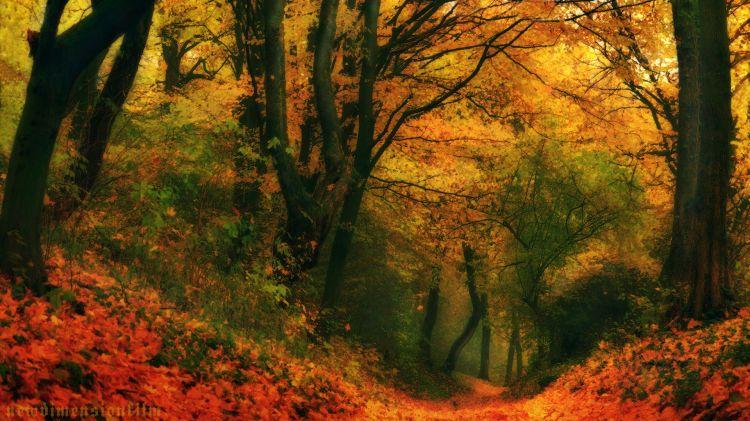 Fonds d'écran Nature Arbres - Forêts Impressions d'automne 2012-5-de feu forêt.
