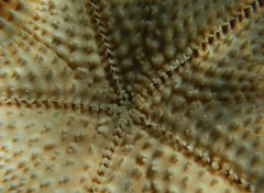 Animals Etoile de mer
