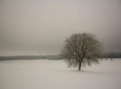 Nature Image sans titre N°325110