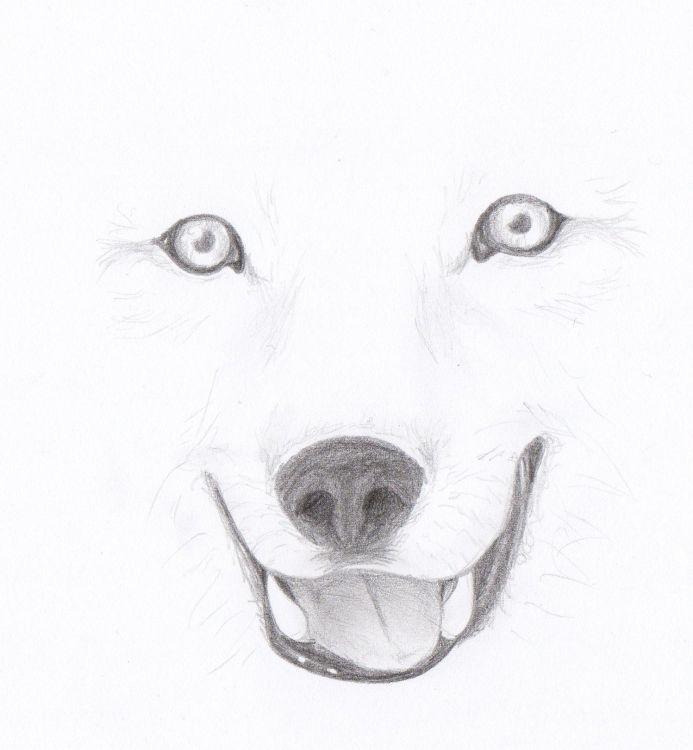 Fonds D Ecran Art Crayon Fonds D Ecran Animaux Loups Loup P
