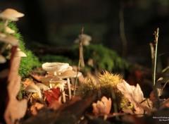 Nature Péchés mortels, du fond des bois