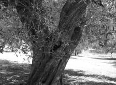 Nature Aceitunaas