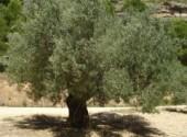 Nature Mon Olivier