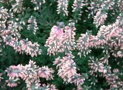 Nature Fleurss