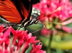 Animaux Papillons d'Hunawhir