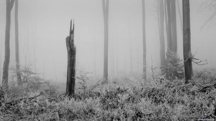 Fonds d'écran Nature Arbres - Forêts Sombre forêt 1.