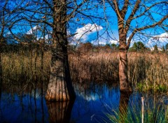 Nature Les pieds dans l'eau...