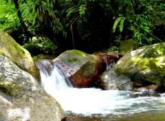 Nature tropical river