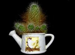 Nature Cactus en pot