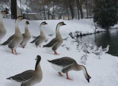Animals La beauté du paysage sous la neige.
