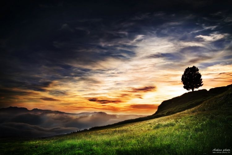 Wallpapers Nature Sunsets and sunrises The tree of sunset