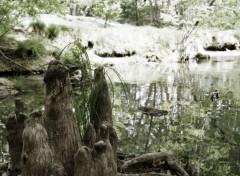 Nature Racines