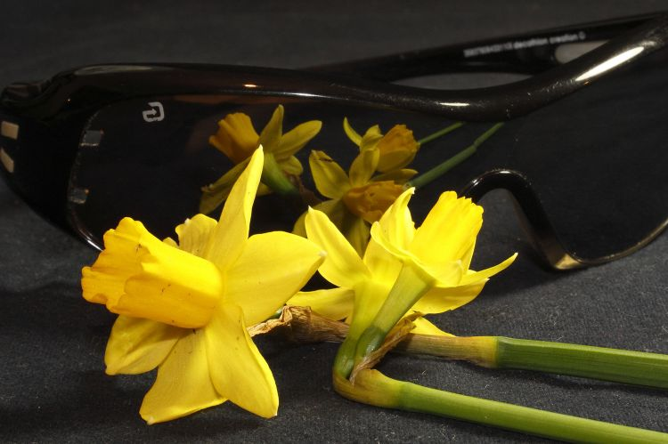 Fonds d'écran Nature Fleurs Jonquilles