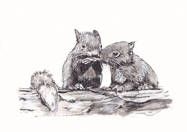 Wallpapers Art - Pencil Animals - Squirrels Ecureils