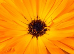 Nature Soleil Floral
