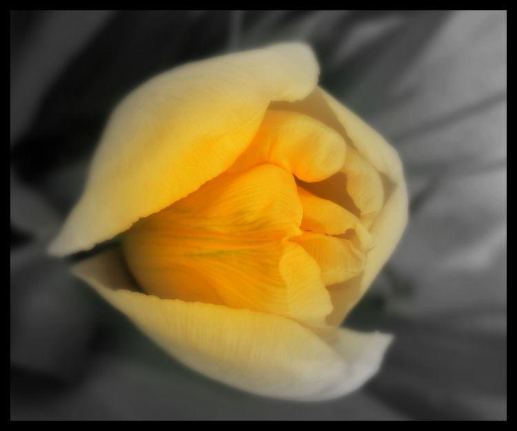 Fonds d'écran Nature Fleurs Wallpaper N°340906