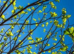 Nature Fini les bourgeons, place aux feuilles !