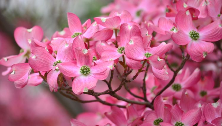 Fonds d'écran Nature Fleurs Wallpaper N°342169