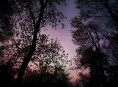Nature Paysage nocturne