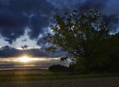 Nature Promenons-nous dans les champs