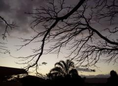Nature silhouette d'un arbre