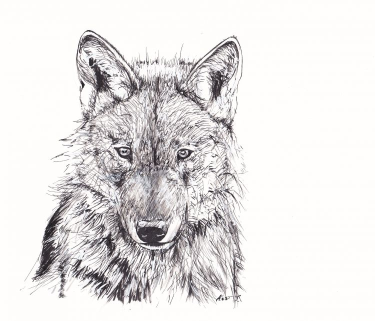 Wallpapers Art - Pencil Animals - Wolves Loup