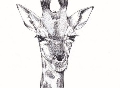 Art - Pencil Portrait de girafe (dessin)