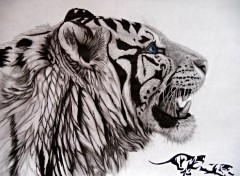 Art - Pencil tribal tiger